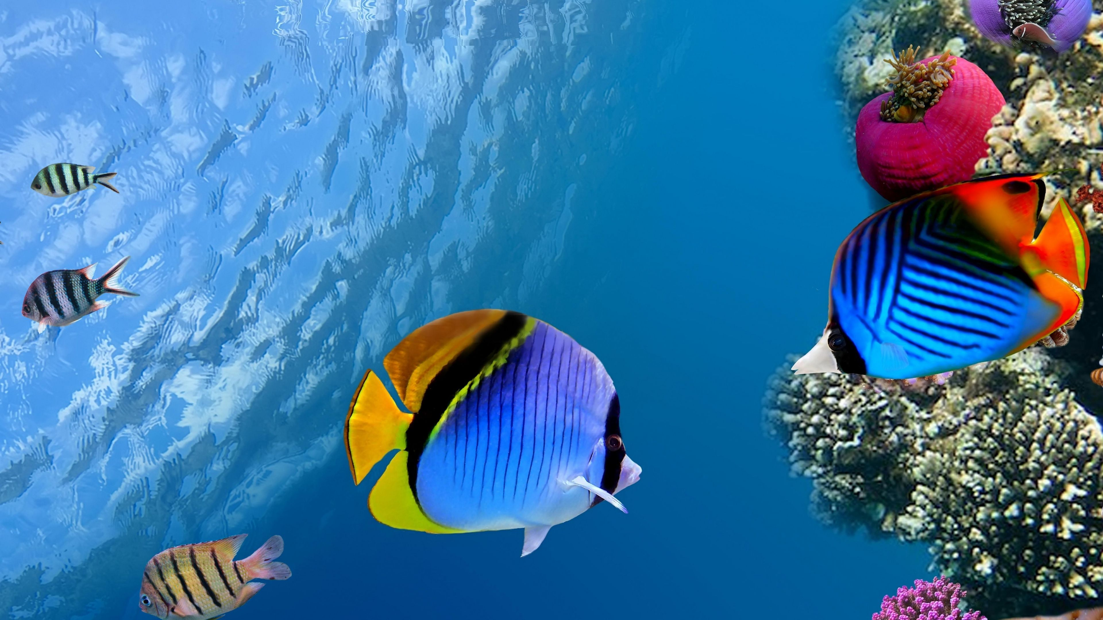 Download Wallpaper 3840x2160 Under Water Coral Fish Sea Ocean Underwater Wallpaper Animal Wallpaper Ocean Wallpaper