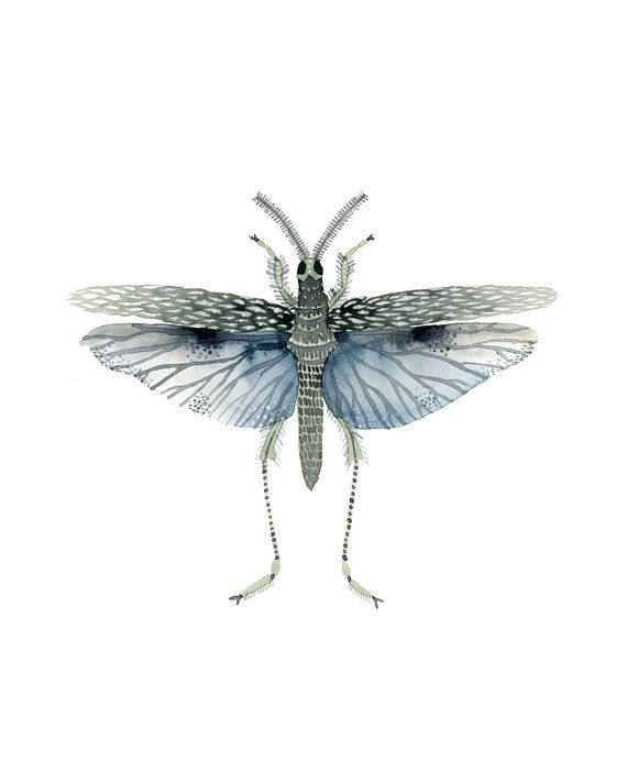 Blue Insect Watercolor Print by ImaginaryNature on Etsy