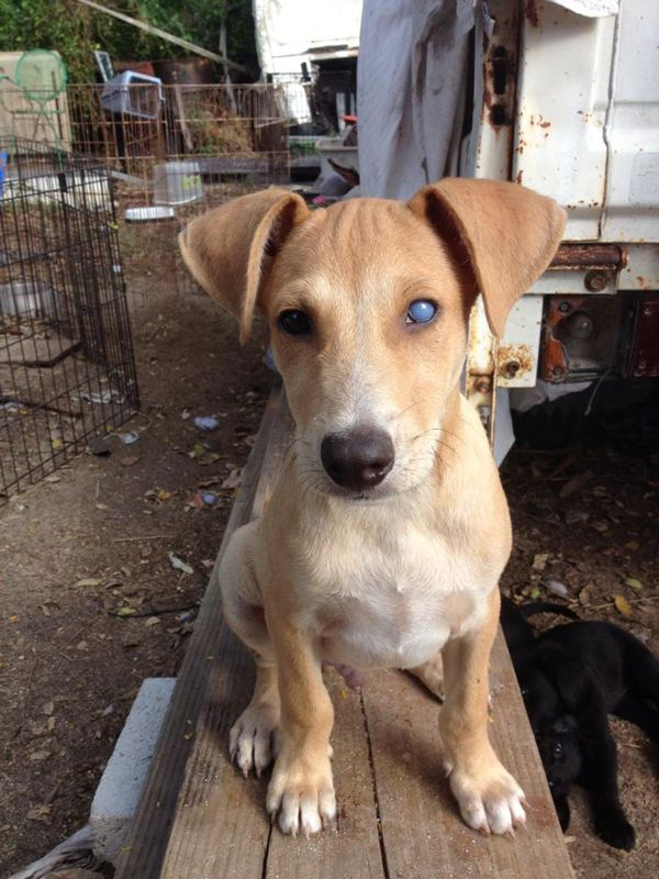 Roscoe A Rescue Dog With A Cloudy Eye Has A Clear Future Rescue Dogs Roscoe Puppy Find