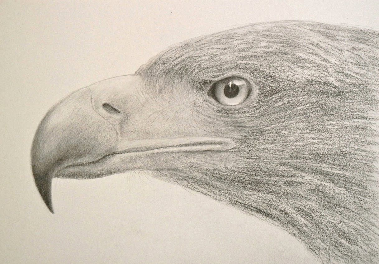 How to Draw Textures Drawing a Realistic Eagle Head Fine
