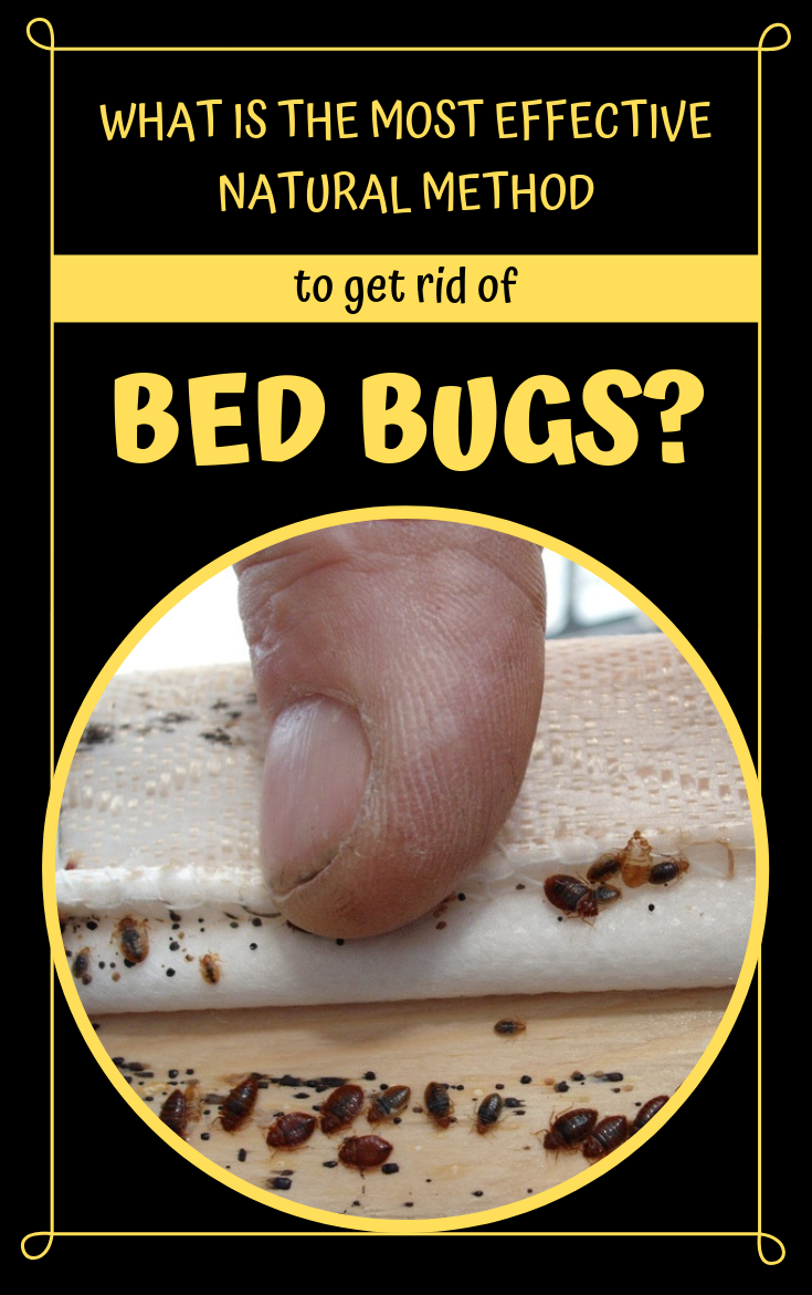 How to Get Rid of Bed Bugs Forever (15 Natural Ways) Rid