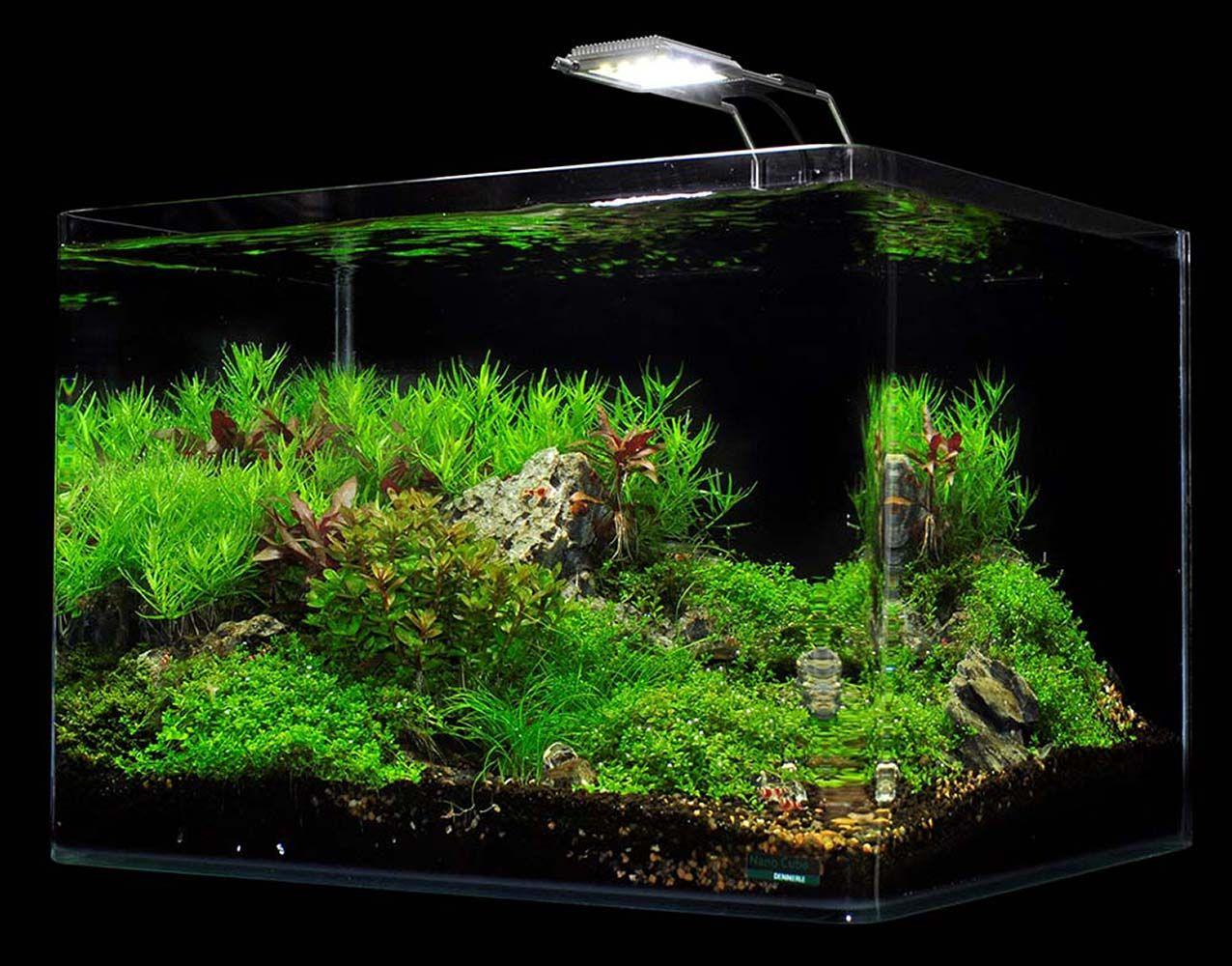 Dennerle Scapers Tank 10 Gallon Aquarium Kit With Led Light Fixture Fish Tank Plants Planted Aquarium Amazing Aquariums