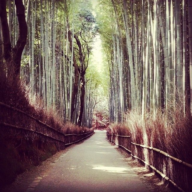 Disappear into Kyoto's bamboo forests -- not a bad place for a honeymoon! Photo courtesy of jenbush00 on Instagram.