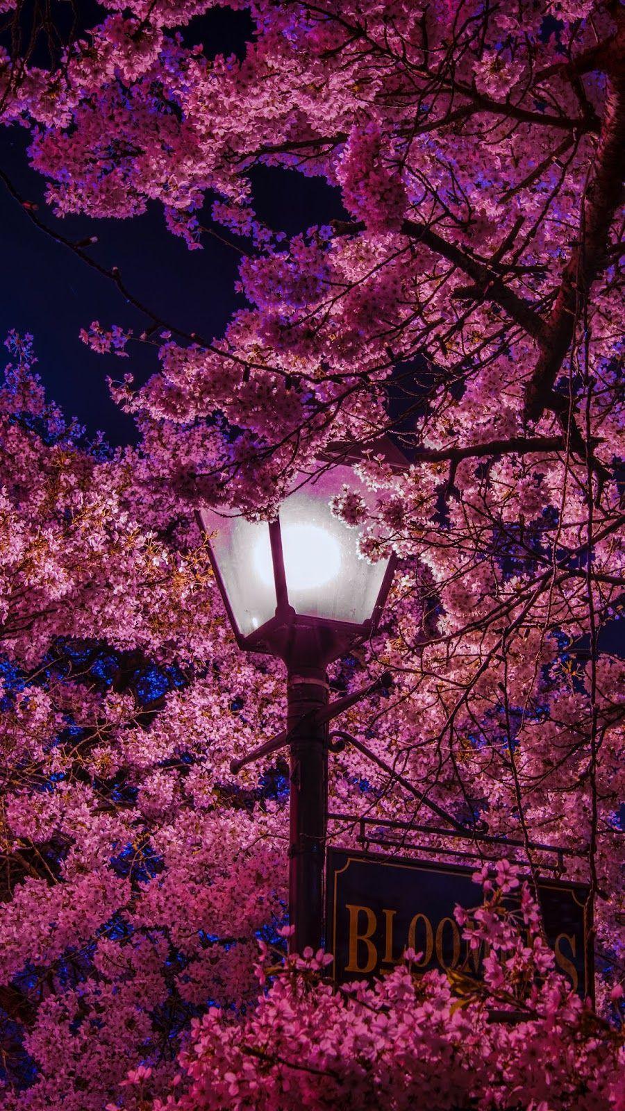 Sakura Night Wallpaper Iphone Android Background Followme Spring Wallpaper Flower Phone Wallpaper Pretty Wallpaper Iphone