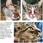 Feline Oral Squamous Cell Carcinoma An Overview With Images
