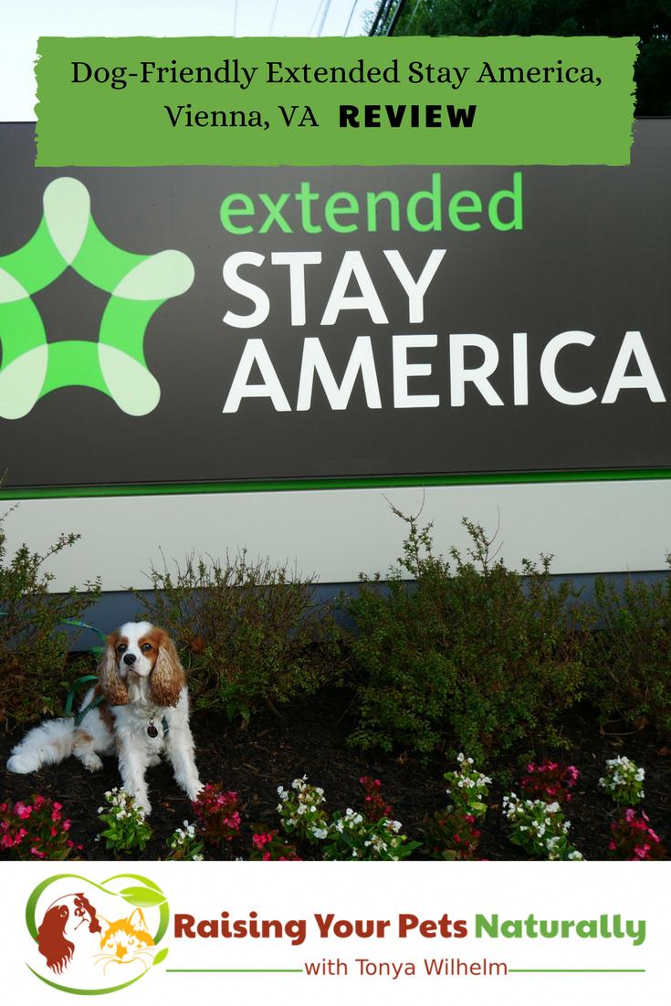 Pet Friendly Hotels In Washington Dc Area Vienna Virginia Dog Hotel