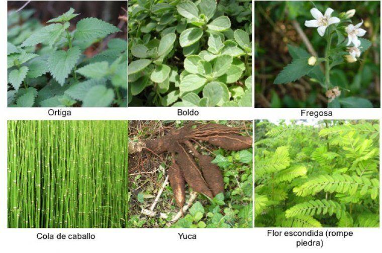 50 Plantas Medicinales Nombres Y Para Que Sirven Hierbas