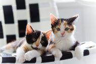 Sister kittens stock photo