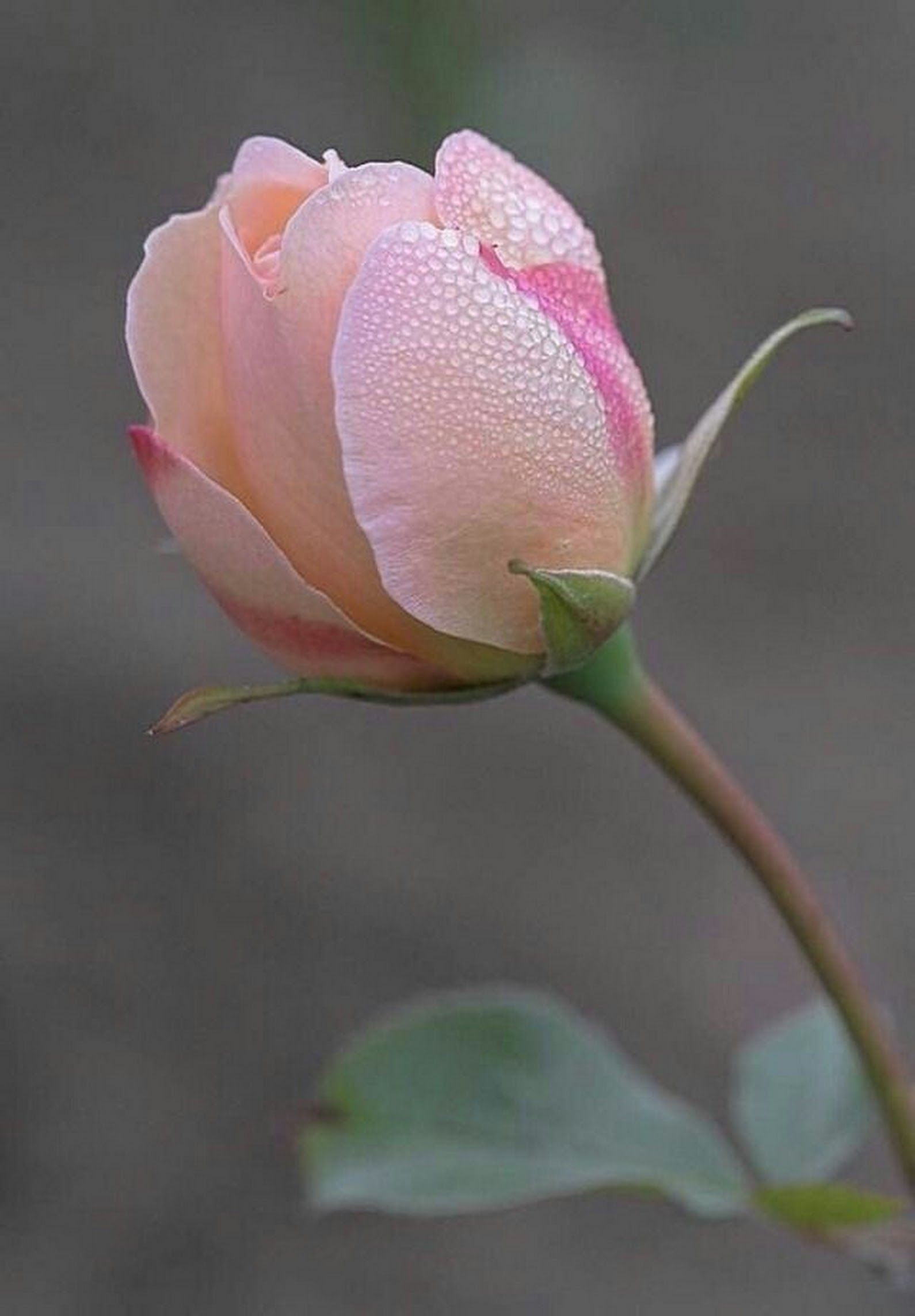 Meryem Google+ Hoa đẹp Flowers, Sunflower flower