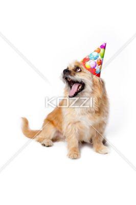 Bored Birthday Puppy