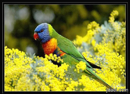 روعة الخلق صور اجمل الوان الطيور منتدى جدايل Animals Parrot Bird