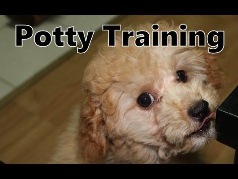 Over 50 000 Dogs Have Been Successfully Potty Trained By The