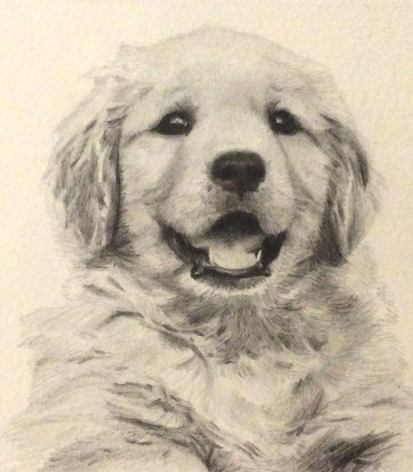 Golden Retriever Puppy By Isadorrah Deviantart Com On Deviantart Golden Retriever Puppy Golden Retriever Drawing Dog Canvas Painting [ 956 x 836 Pixel ]