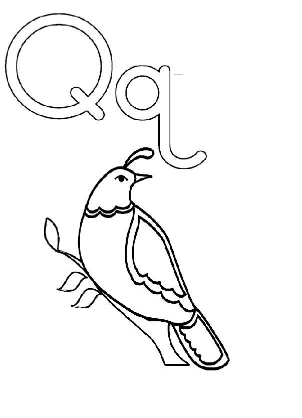 Activity Coloring Pages Q Is For Quail Coloring For Kids Kids Coloring Art Letter A Crafts Letter Q Crafts Coloring For Kids