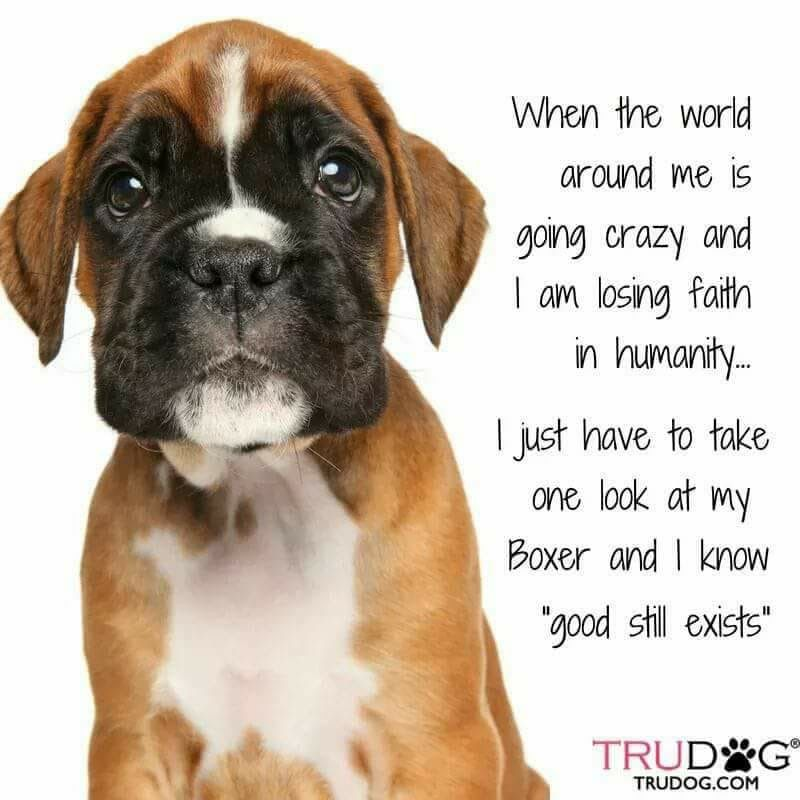 Boxer Dog Slogans - Year of Clean Water