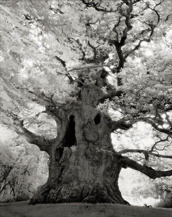 Fotógrafa retrata as árvores mais velhas e curiosas do mundo - Fotos - UOL Notícias
