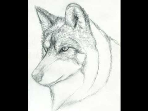 How to draw a Realistic Wolf (Step by Step) | Sketches