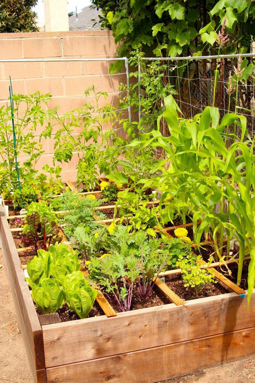 Gardening For Beginners in 2020 Gardening for beginners