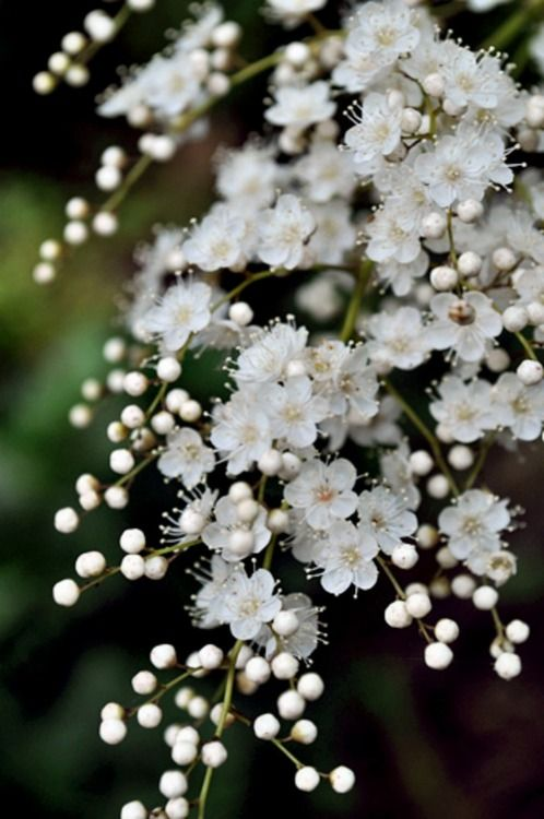White Spring Blossoms Beautiful Wildflowers Flowers Moon Garden