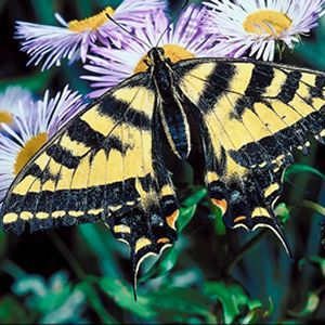 How to Attract Butterflies To Your Yard! #spring # ...