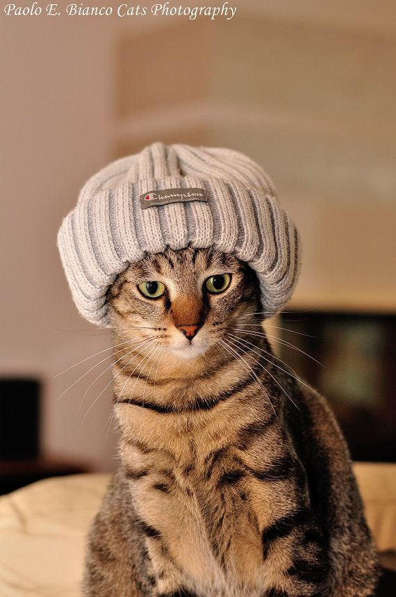Photo Print Beautifoul Cat with Hat Cute Cat Photography