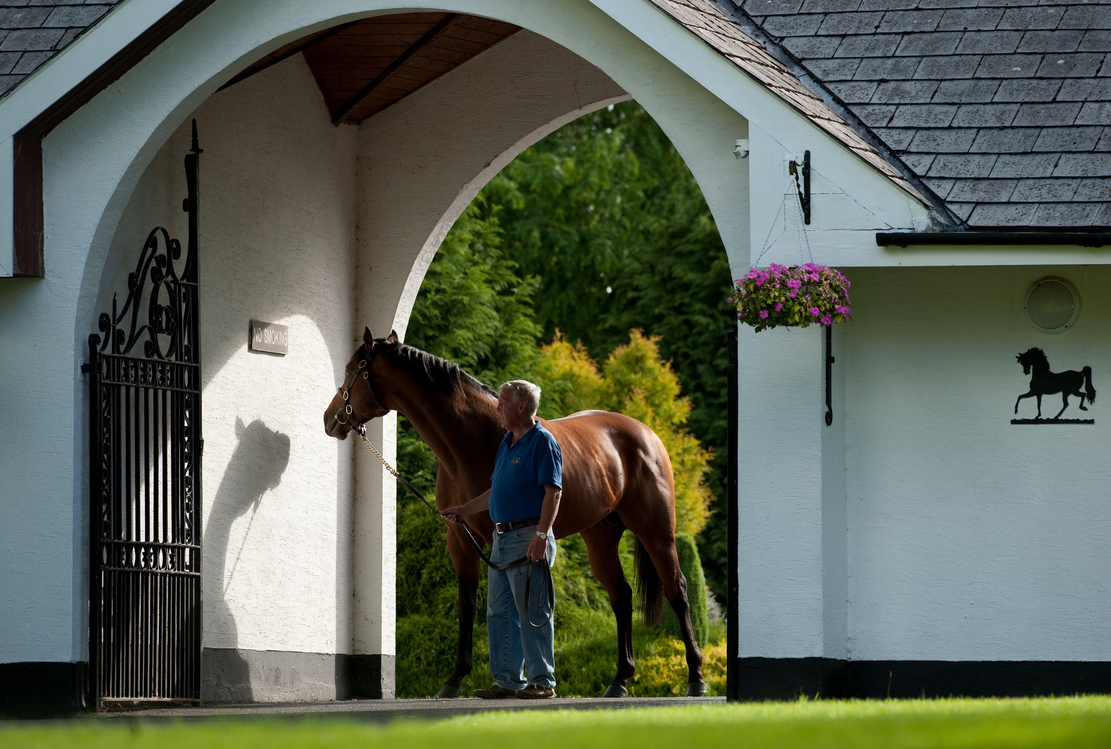 Irish National Stud Gardens Farm Tour Irish Horse Ireland Travel