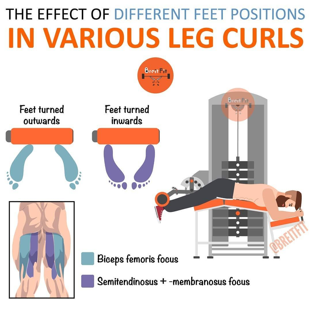 Benefit From Glute And Leg Mass With Just One Exercise: The Leg Curl! Ideal For Men And Women