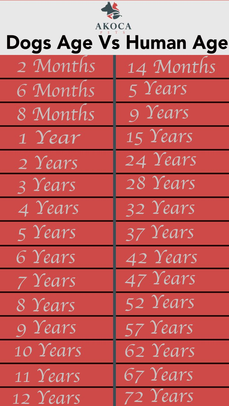 Dog years vs human years dog years dog care tips dog ages