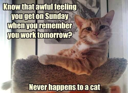 Monday's Purry Reasoning - cats are so lucky!