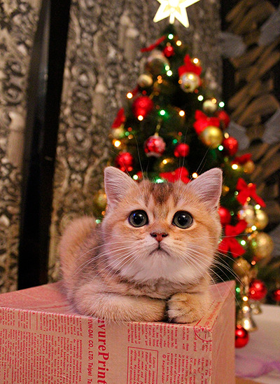 May Your Blogs Be Merry And Bright Christmas cats, Cute