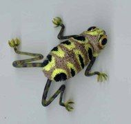 Photo of Leopard Frog step by step fly fishing tying tutorial