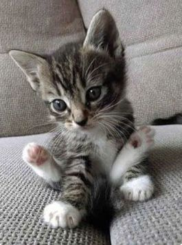 Open Page To Skip Kittens Cutest Cute Animals