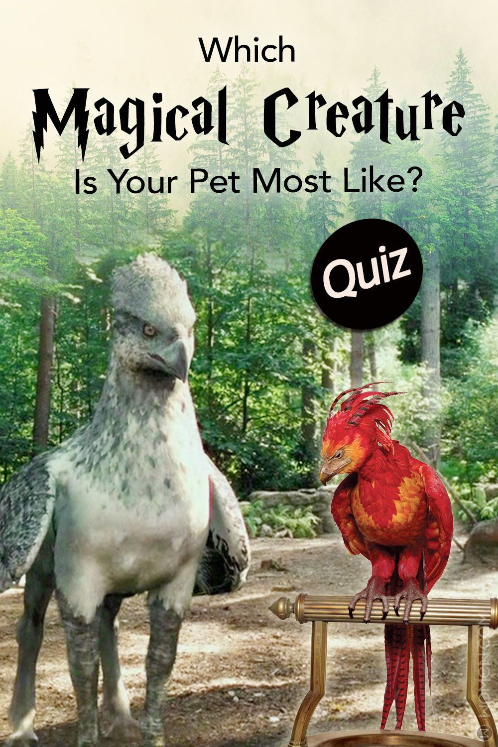 Hogwarts Quiz Which Magical Creature Is Your Pet Most Like Magical Creatures Harry Potter Harry Potter Creatures Magical Creature