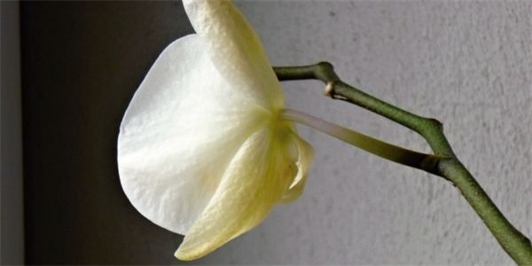 Pin On Orchideje