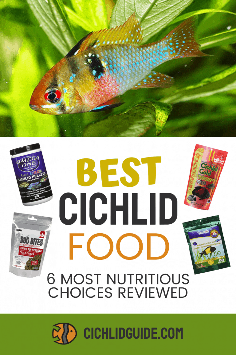 The 6 Best Cichlid Foods Reviewed 2020 Herbivore and