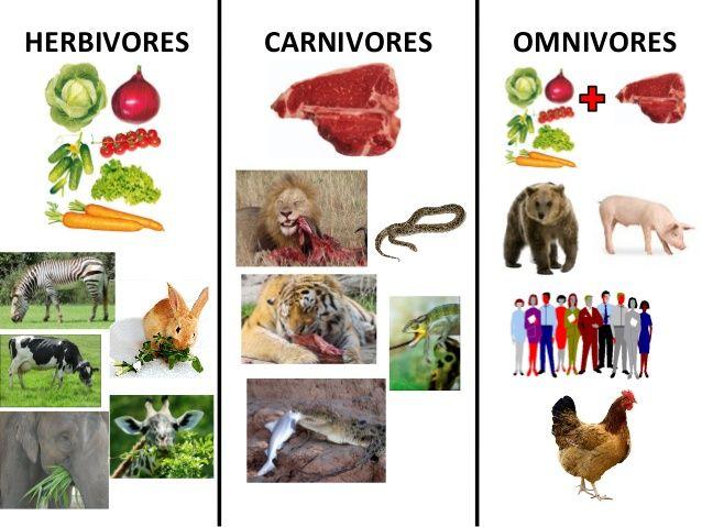 Herbivore Animals Coloring Pages : Teeth of herbivores carnivores and omnivores google search