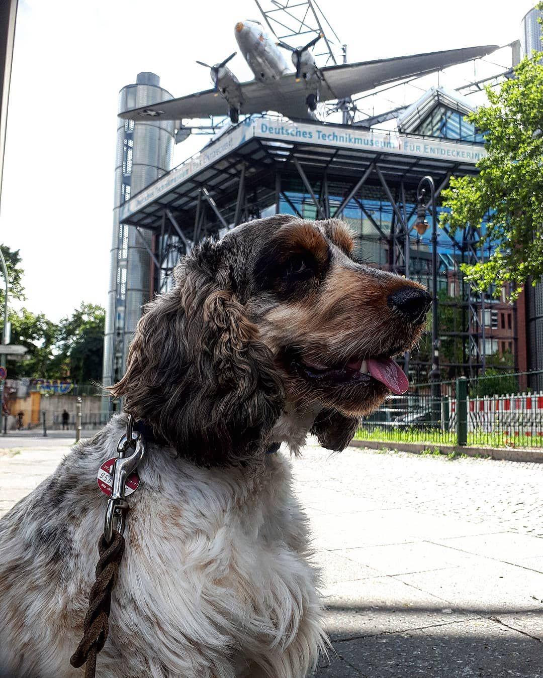 Museum Fur Verkehr Und Technik Berlin Hundewelt