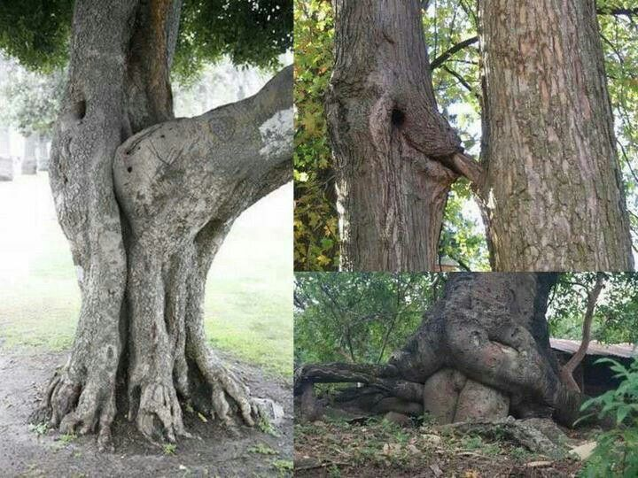 Even trees get into it.