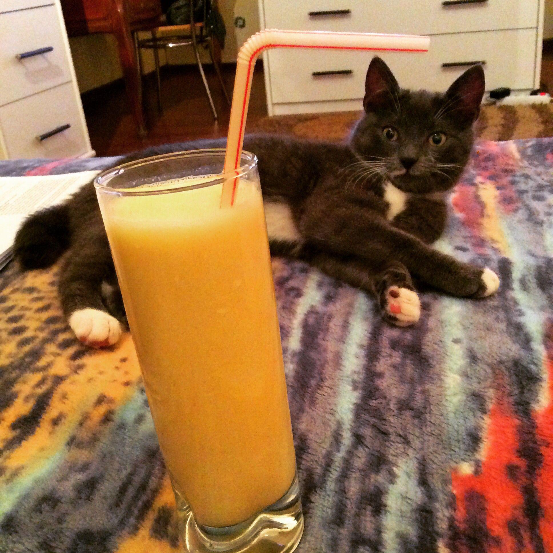 Ohhh Yummy Thanks Ciuli Samo Tomcat Smoothie Orange Lovemykitty Glass Of Milk Yummy Samo