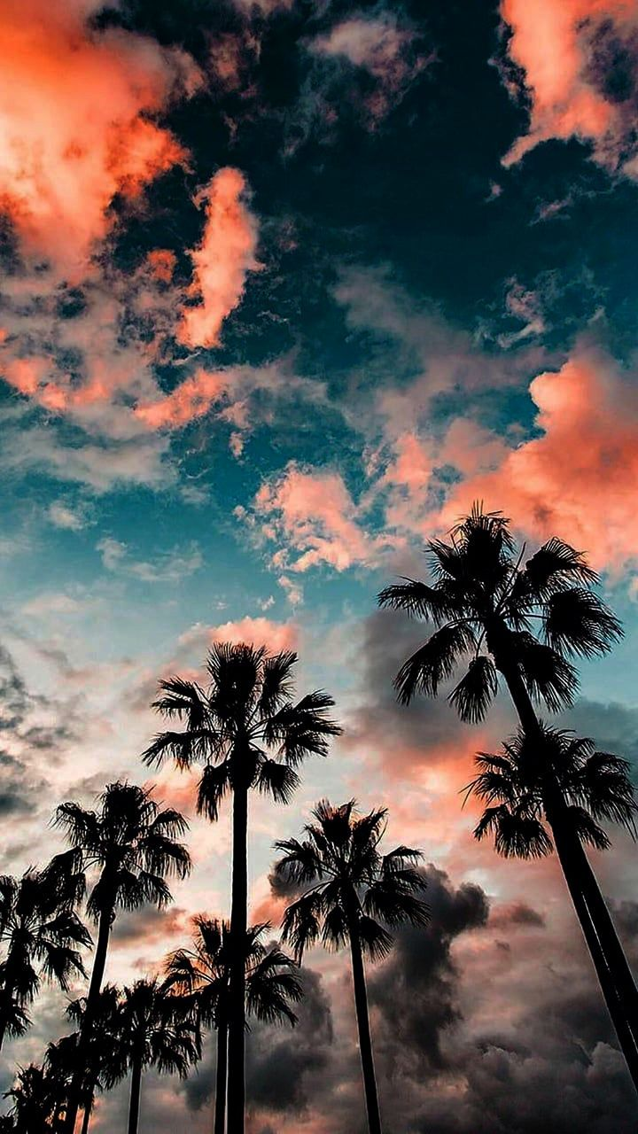 Music Wallpapers For Iphone 8 Plus Girly Wallpapers For Iphone Tumblr To Iphone Xs Max Lion Wallp Beautiful Summer Wallpaper Summer Wallpaper Scenery Wallpaper