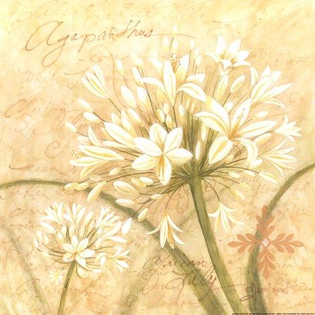 African Lily White by Annie Lapoint art print