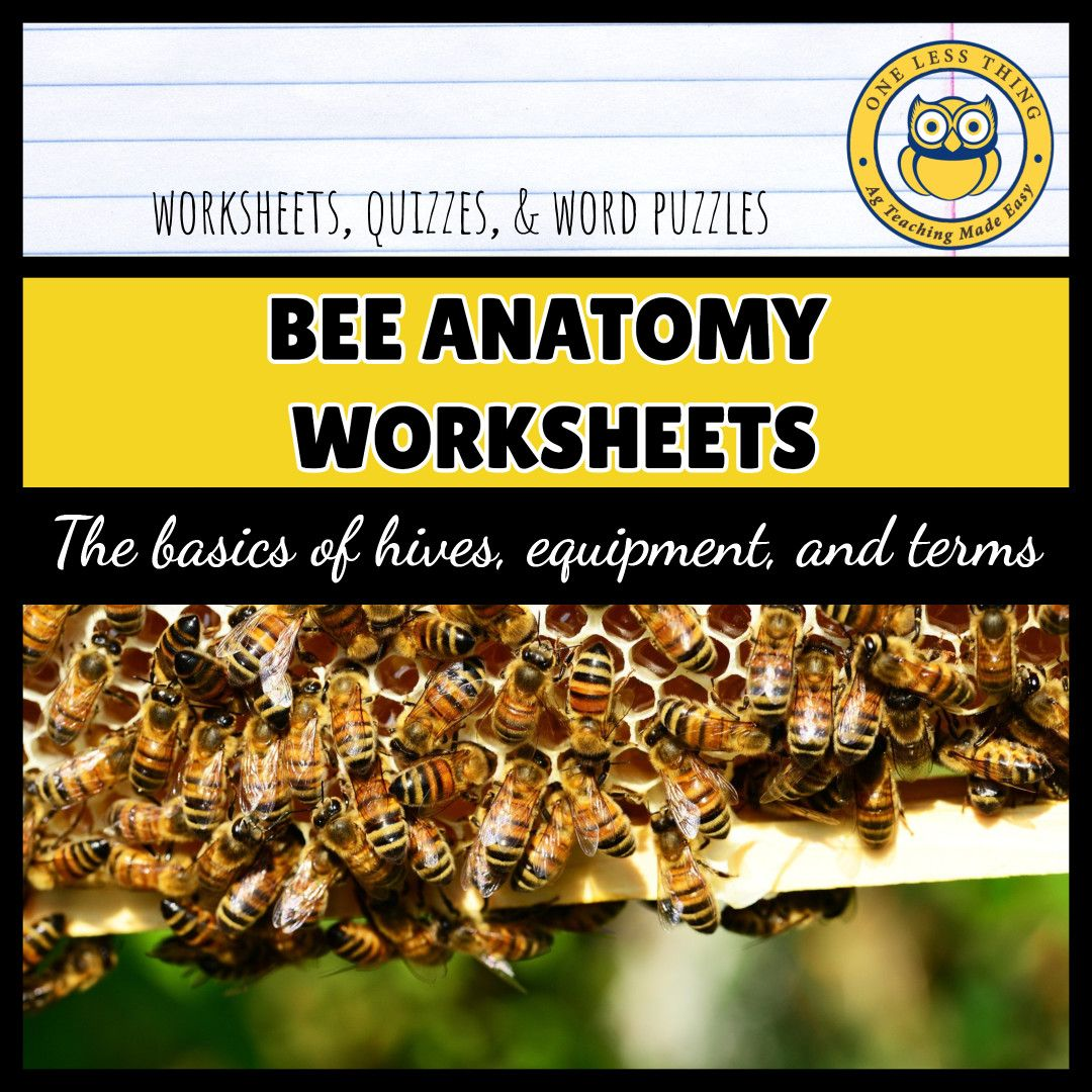 Beekeeping Worksheets That Cover Apiculture Diseases