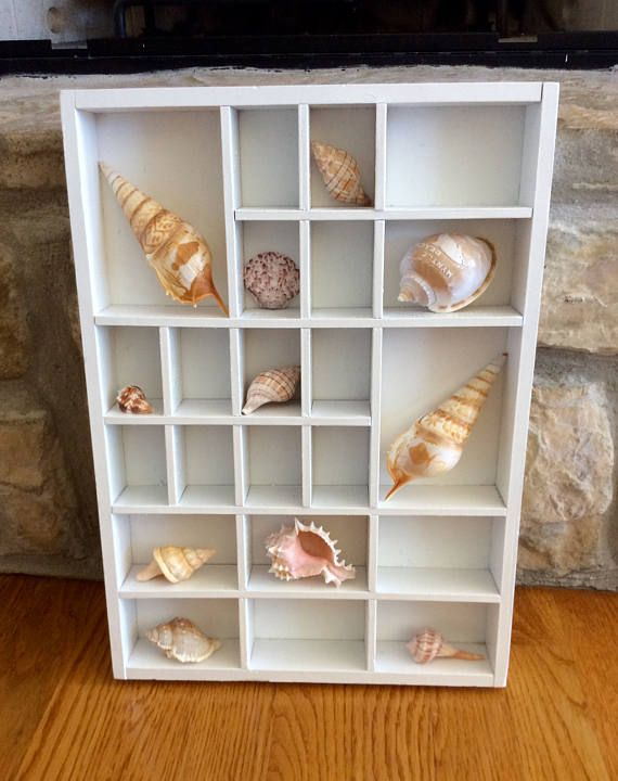 Beautiful White Wood Display Case For Seashell Collection Or Miniature Storage Seashells For Display Only No Wall Display Case Display Case Printers Drawer