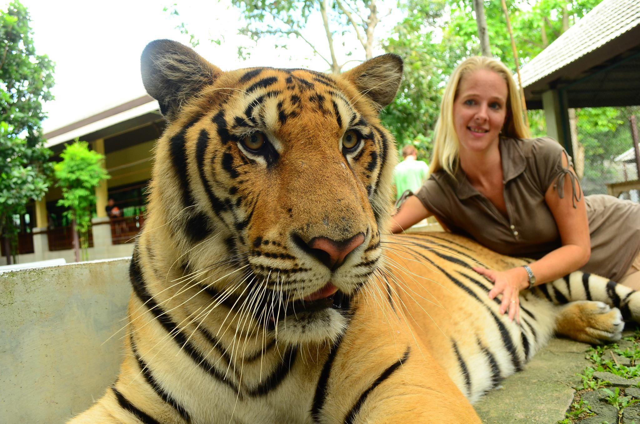 Tiger Stripes God ART!