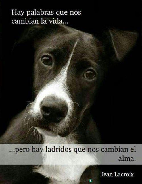 Imagenes De Perros Para Whatsapp Perros Frases Imagenes De Perros Animales Frases