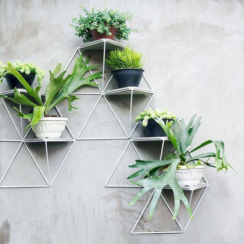 When You Run Out Of Room For Your Plants On The Floor There S Always Room On Your Walls For Shelves Photo From Des Geometric Shelves Plant Decor Plant Design