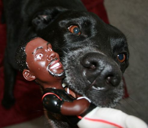 Let The Dogs Out Eagles Sign Michael Vick Michael Vick Dogs