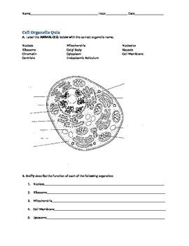 Cell Organelle Quiz | Quizes
