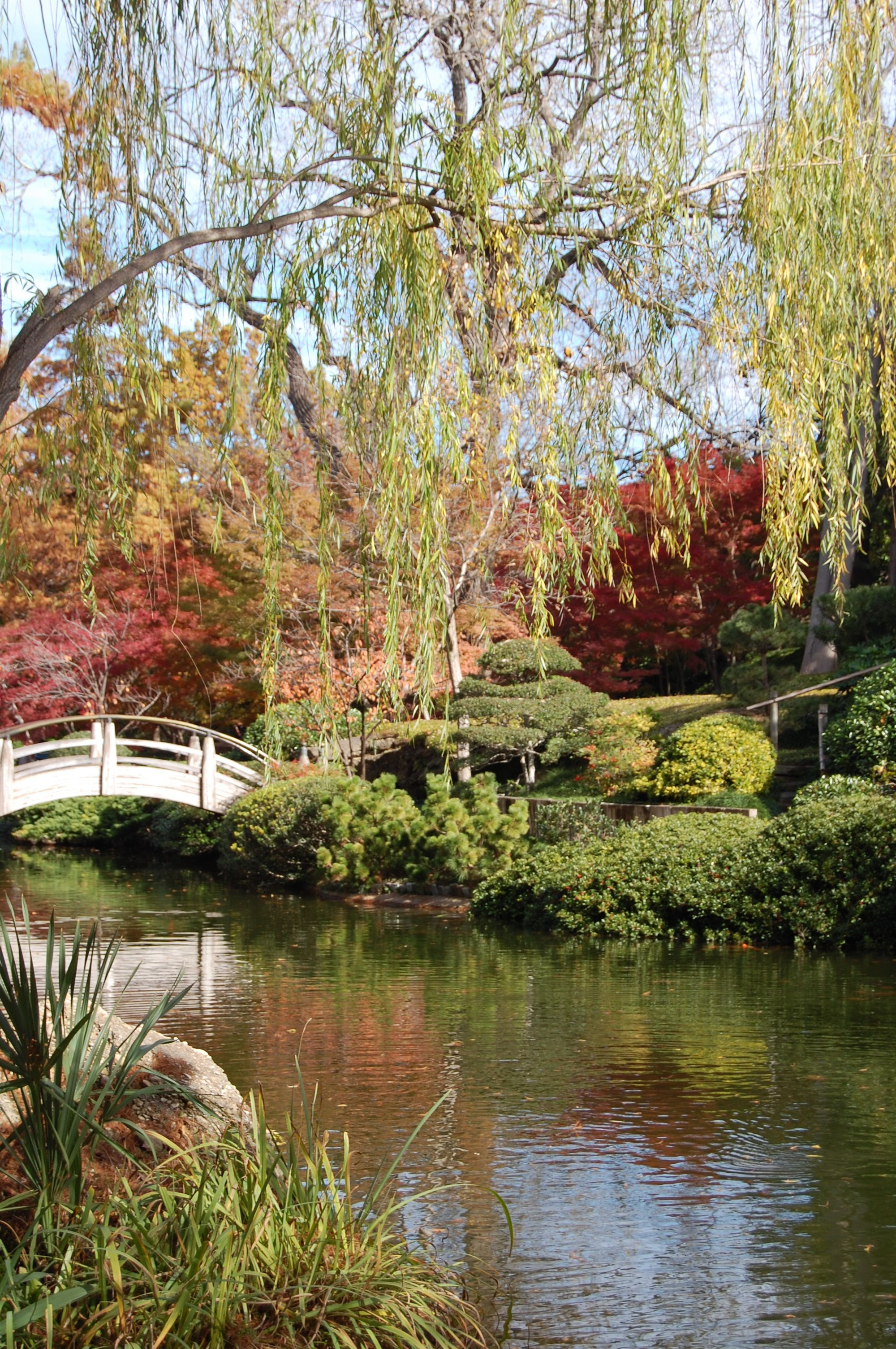 Ft., Worth Botanic Garden, Photographer Carrie Dubberley | Fall ...
