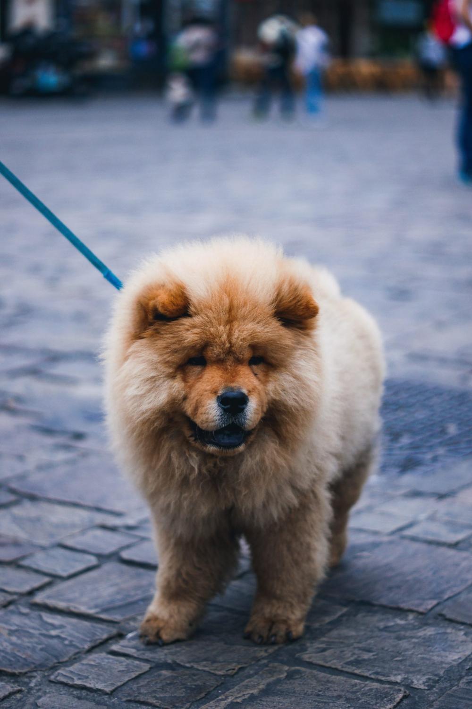 106 Best Fluffy Dog Names Labrottie Com In 2020 Fluffy Dogs Dog Names Fluffy Dog Breeds